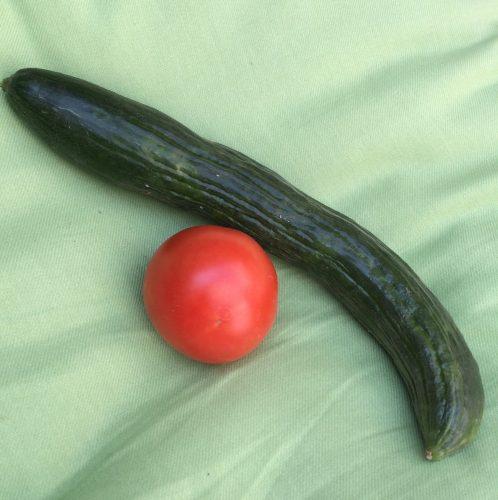 Endlich eine Tomate