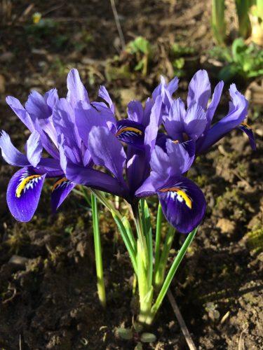 Den Frühling getroffen